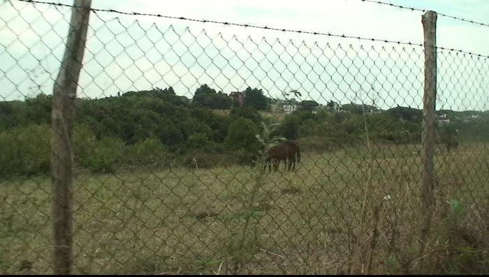 ローマ郊外の牧場のお馬さん